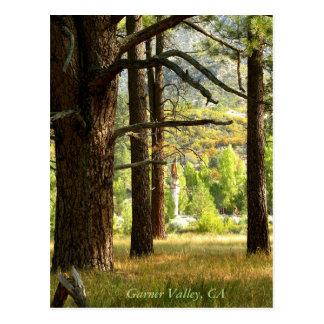 Scenic Trail Postcatd In Garner Valley, CA Postcard