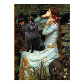 Schipperke 2 - Ophelia Seated Poster