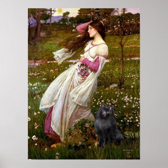 Schipperke 2 - Windflowers Poster