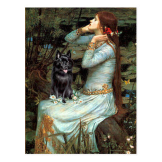 Schipperke 4 - Ophelia Seated Postcard
