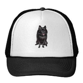Schipperke (B) Mesh Hats