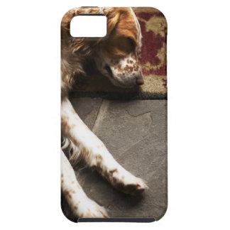 Schlafender Llewelyn Setzer Case For The iPhone 5
