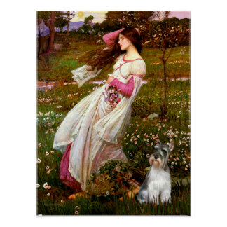 Schnauzer 11N - Windflowers Poster