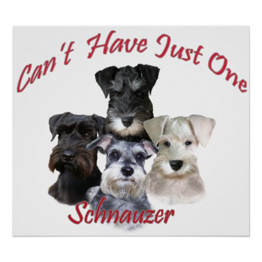 Schnauzer Can't Have Just One Prints Poster