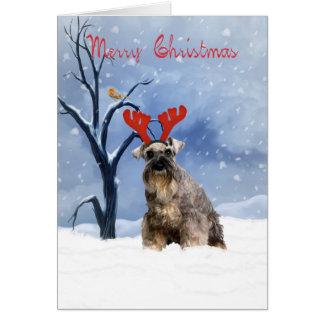 schnauzer christmas card - schnauzer has reindeer