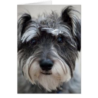 Schnauzer Dog Greeting Card
