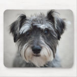Schnauzer Dog Mouse Pad