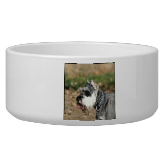 Schnauzer dog pet food bowl