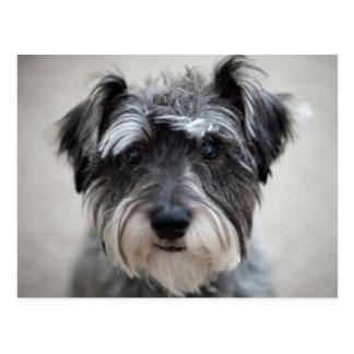 Schnauzer Dog Postcard