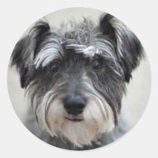 Schnauzer Dog Sticker
