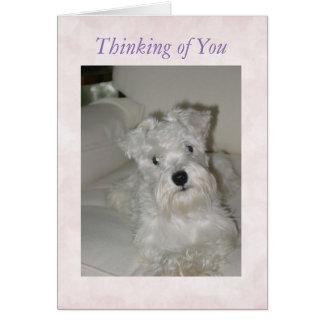Schnauzer Greeting Card