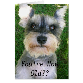 Schnauzer Happy Bday Greeting Card