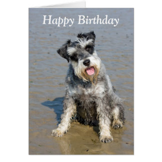 Schnauzer miniature dog beach photo birthday card