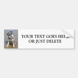 Schnauzer miniature dog cute photo at beach custom bumper sticker