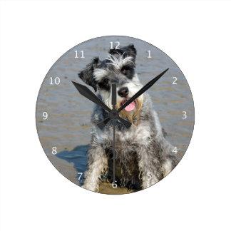 Schnauzer miniature dog cute photo at beach, gift clocks