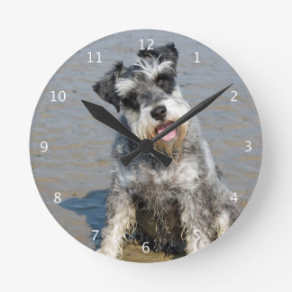 Schnauzer miniature dog cute photo at beach, gift round clock