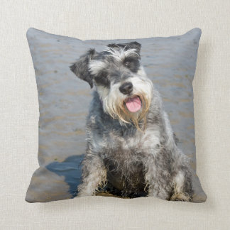 Schnauzer miniature dog cute photo beach, cushion