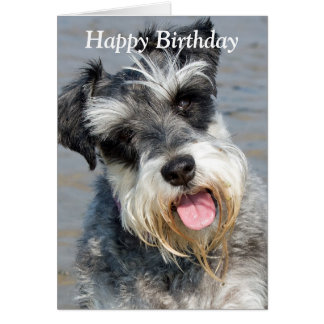 Schnauzer miniature dog photo birthday card