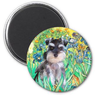 Schnauzer Pup 10Znat - Irises 6 Cm Round Magnet