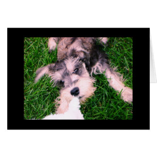 "Schnauzer Puppy--""Let Go!"" Card"
