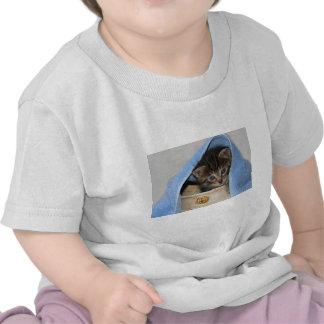 schönes junges Hauskätzchen schaut aus Gefäß Hemd