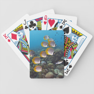 School of angelfish bicycle playing cards