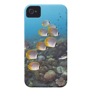 School of angelfish iPhone 4 Case-Mate cases