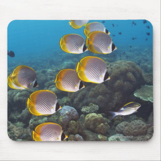 School of angelfish mouse mat