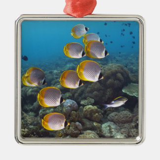 School of angelfish Silver-Colored square decoration