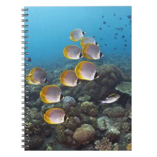 School of angelfish spiral notebook