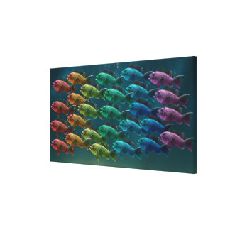 School of black sea bass in the colors of the canvas print