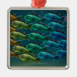 School of black sea bass in the colors of the christmas ornament