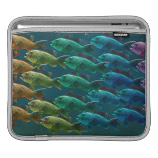 School of black sea bass in the colors of the iPad sleeve