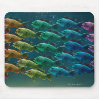 School of black sea bass in the colors of the mouse mat