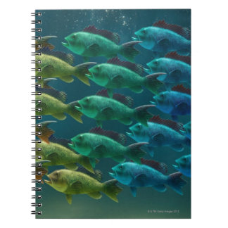 School of black sea bass in the colors of the notebook