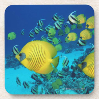School of Butterfly Fish Swimming on the Seabed Coaster