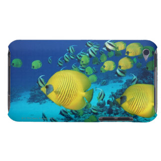 School of Butterfly Fish Swimming on the Seabed iPod Touch Cases