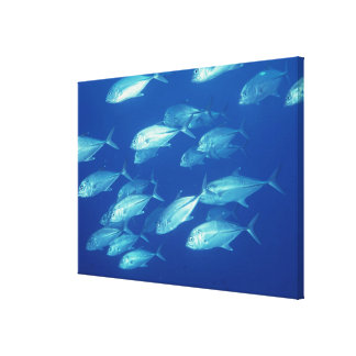 School of Fish 10 Canvas Print