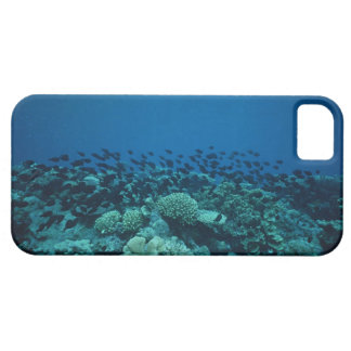 School of Fish 10 iPhone 5 Cover