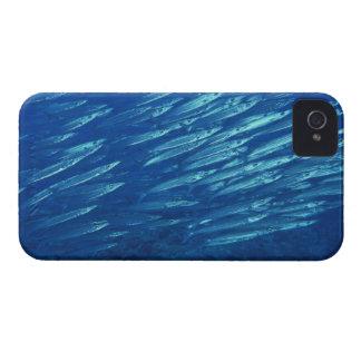 School of Fish 11 iPhone 4 Case-Mate Cases