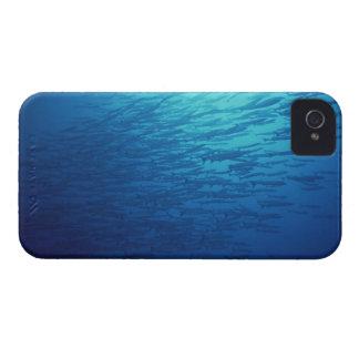 School of Fish 12 iPhone 4 Case