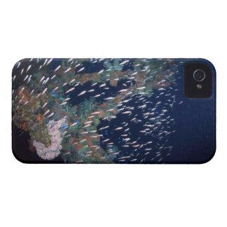 School of Fish 13 iPhone 4 Case