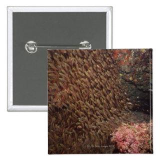 School of Fish 2 15 Cm Square Badge