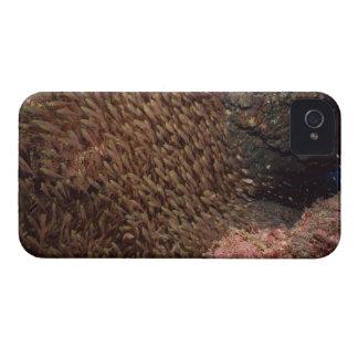 School of Fish 2 Case-Mate iPhone 4 Case