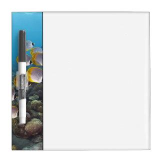 School of Fish 2 Dry Erase Board