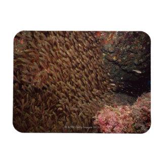 School of Fish 2 Rectangular Photo Magnet