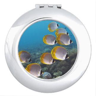 School of Fish 2 Vanity Mirror
