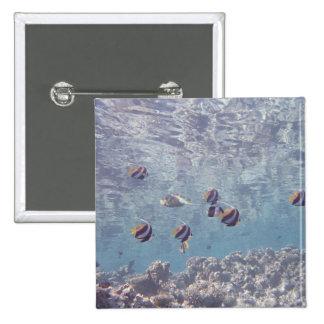 School of Fish 3 15 Cm Square Badge