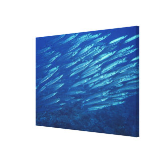 School of Fish 4 Canvas Print