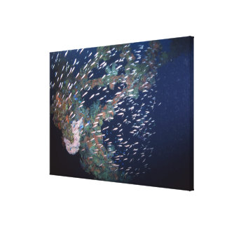 School of Fish 6 Canvas Print